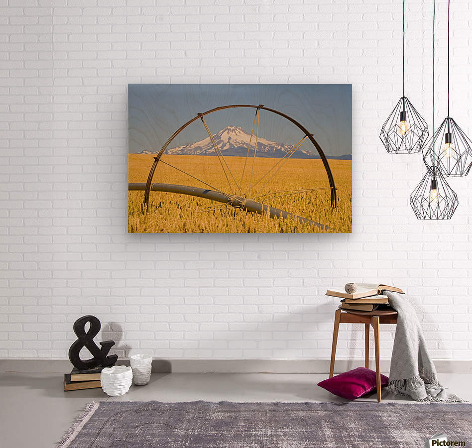 Irrigation Pipe In Wheat Field With Mount Hood In Background; Oregon, Usa  Wood print