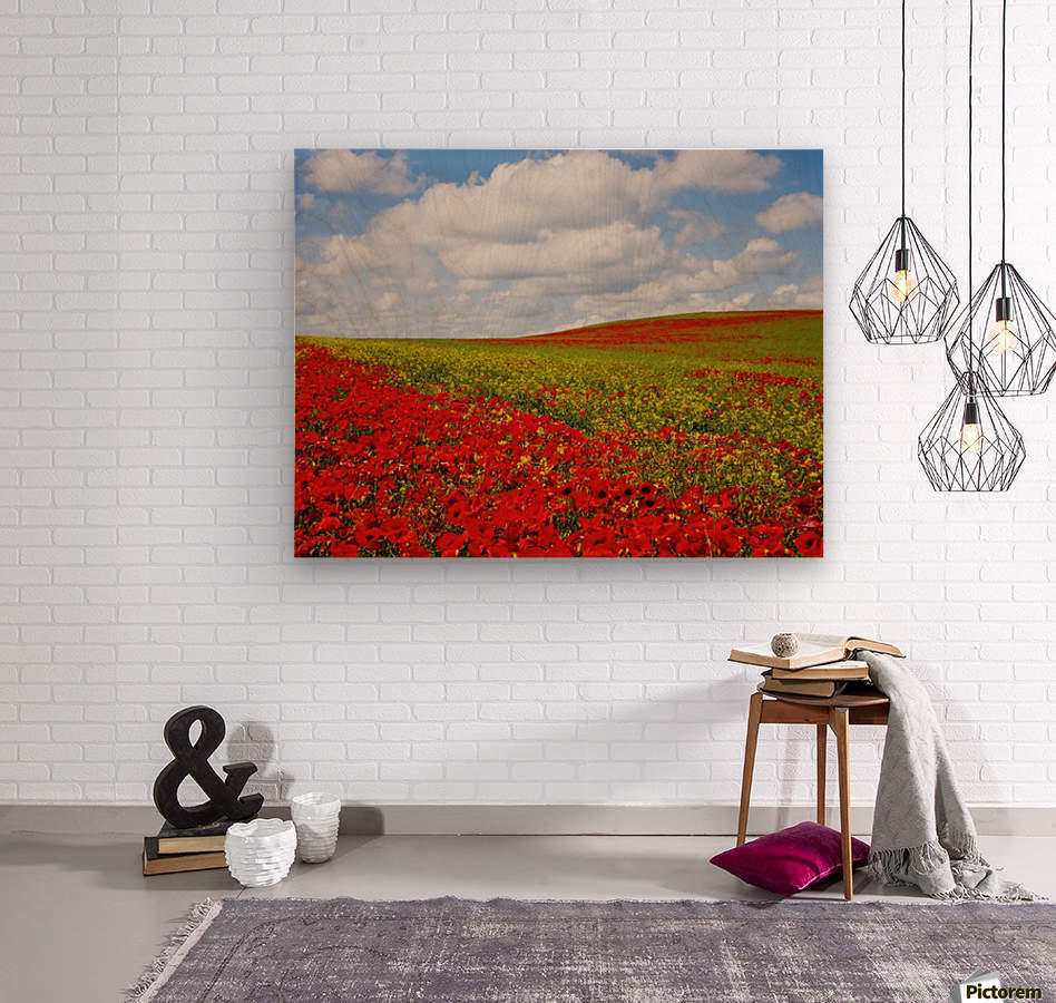 An Abundance Of Red Poppies In A Field; Corbridge, Northumberland, England  Wood print