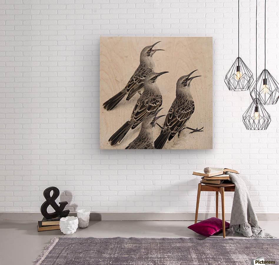 Mockingbirds (Mimidae); Galapagos, Equador  Wood print