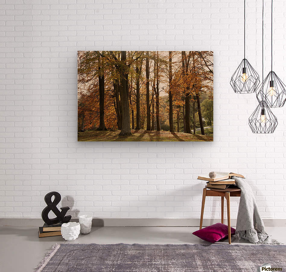 Trees In Autumn Colours Casting A Shadow On The Ground; Northumberland, England  Wood print