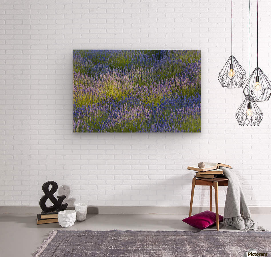 Rows of lavender plants in a field in the cowichan valley;Vancouver island british columbia canada  Wood print