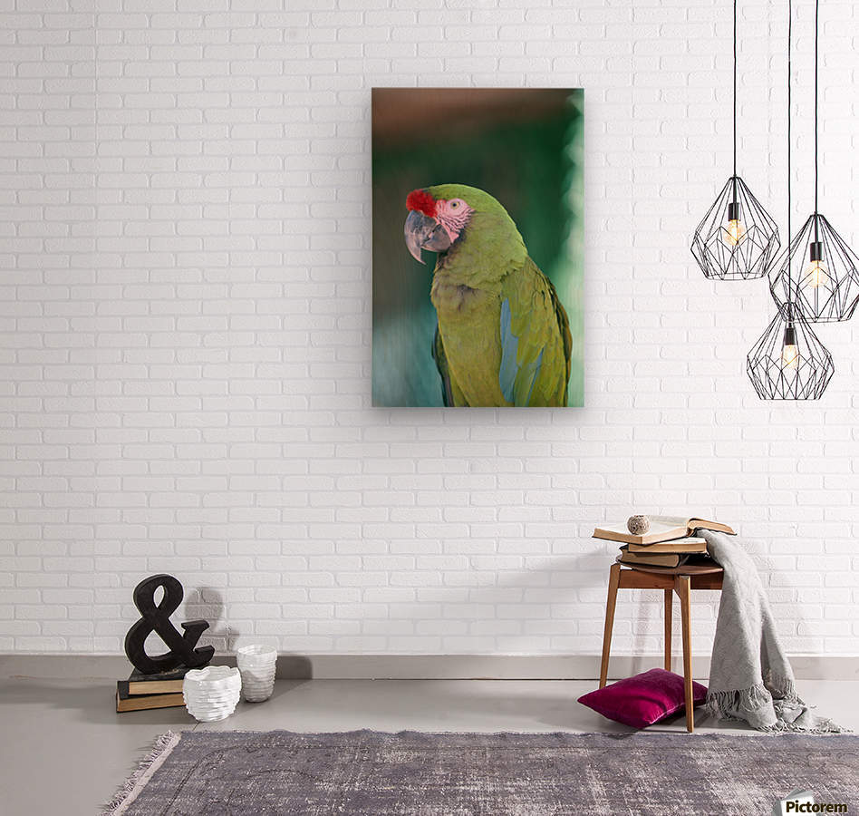 Close up of a parrot;Puerto vallarta mexico  Wood print