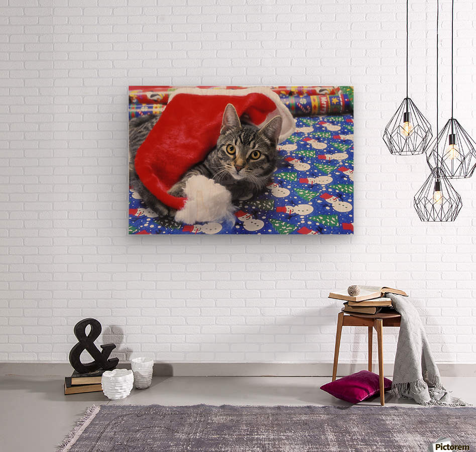 Grey tabby cat with santa claus hat lying on christmas gift wrap;Vancouver british columbia canada  Wood print