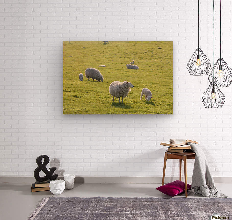 Sheep in a field in the typical English countryside of rolling hills ...