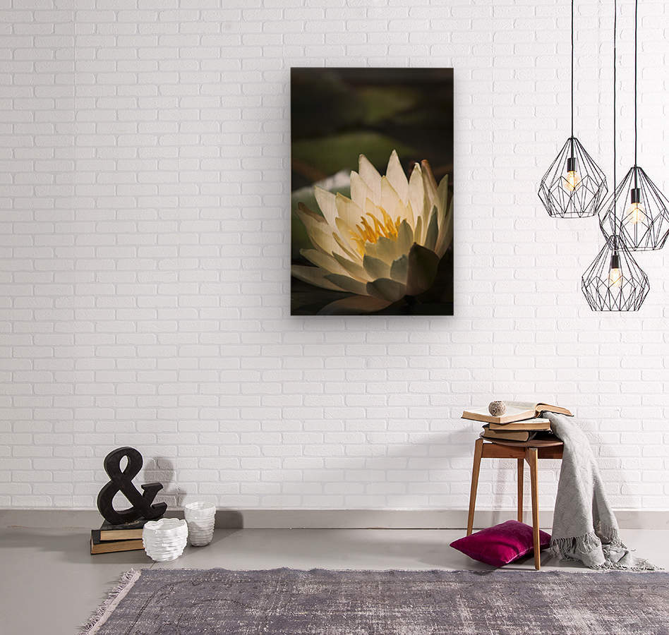 Water lily blooms in a pond; Astoria, Oregon, United States of America  Wood print