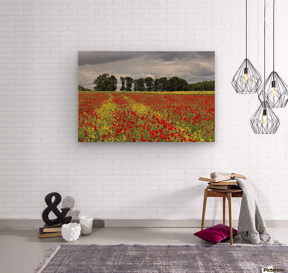A field with an abundance of red and yellow flowers; Northumberland, England  Wood print