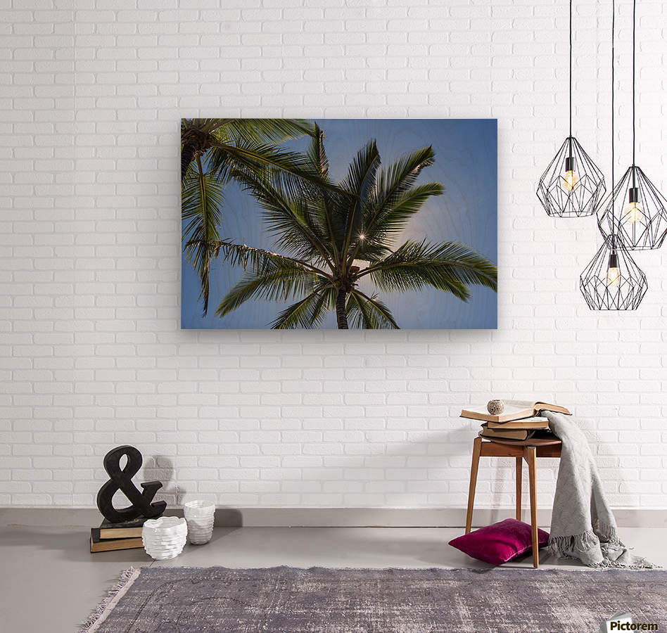 Coconut Palms backlit by the sunlight in a blue sky; Poipu, Kauai, Hawaii, United States of America  Wood print