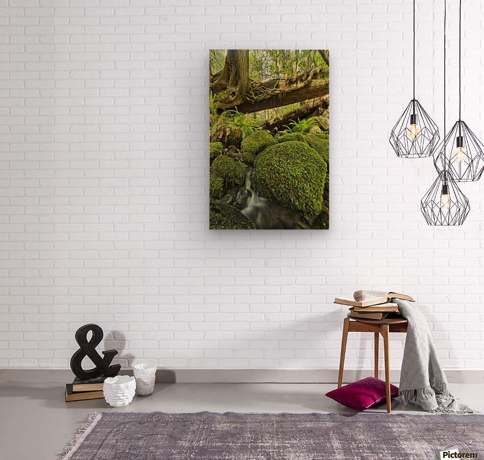 Rainforest in Avatar Grove near Tofino; British Columbia, Canada  Wood print