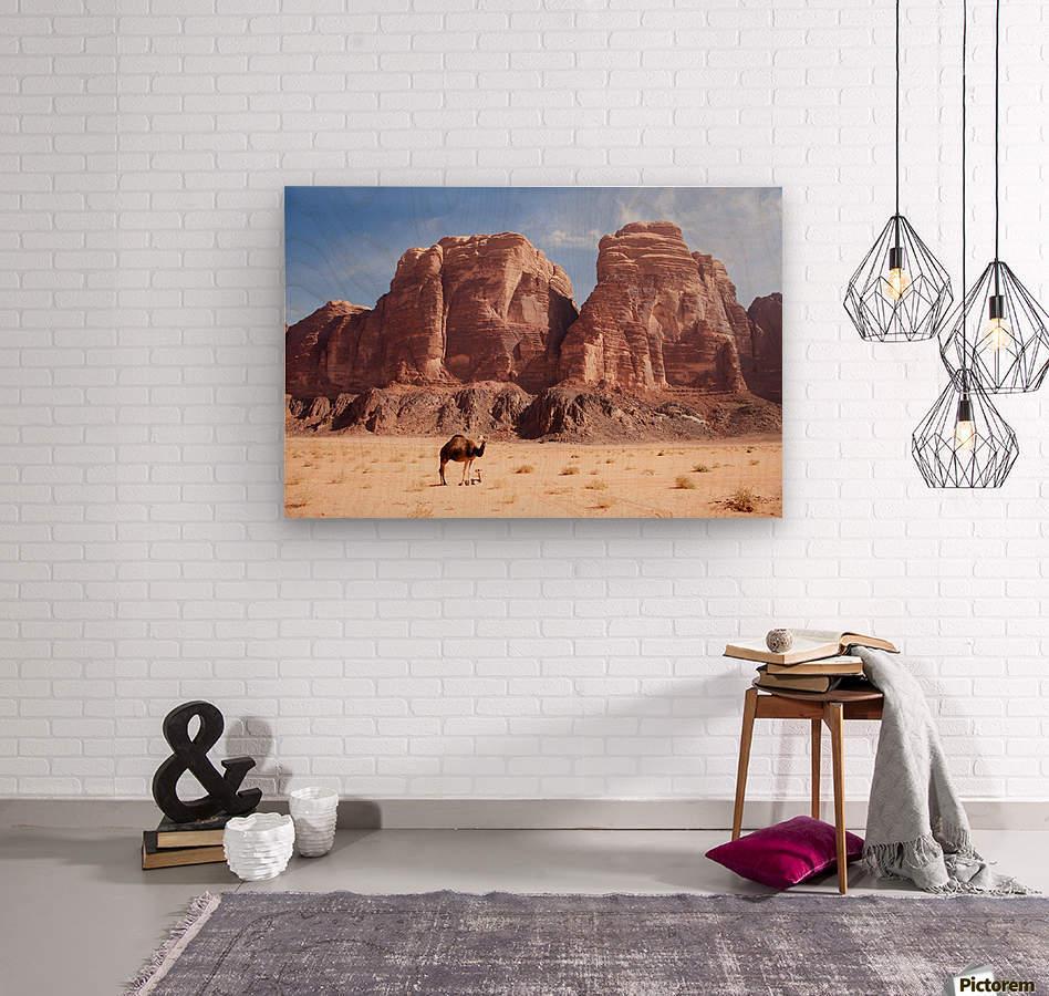 Baby camel and mother; Wadi Rum, Jordan  Wood print