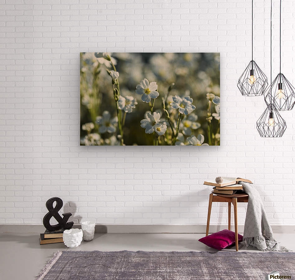 Chickweed (Stellaria media) blooms profusely in the spring; Astoria, Oregon, United States of America  Wood print