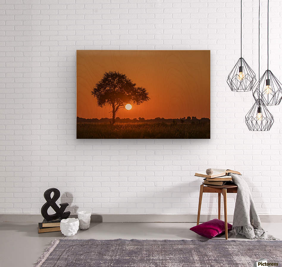 Backlit grass and silhouetted tree at sunset; Botswana  Wood print