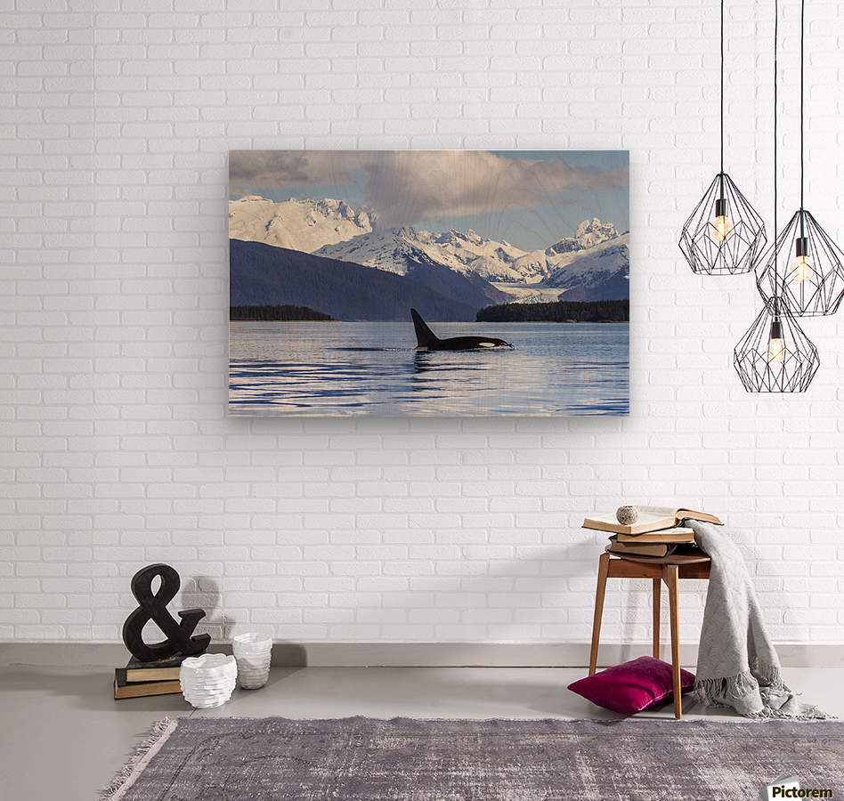 An Orca Whale (Killer Whale) (Orcinus orca) surfaces in Lynn Canal, Herbert Glacier, Inside Passage; Alaska, United States of America  Impression sur bois