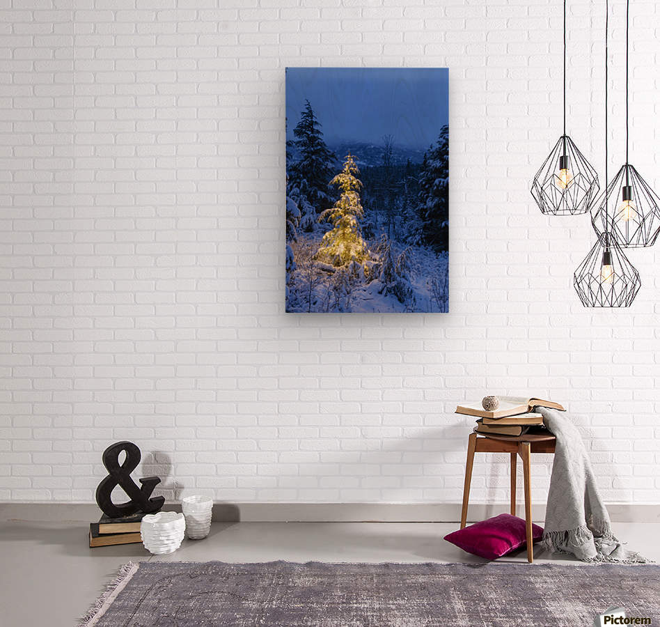 A festive Mountain Hemlock evergreen tree strung with white lights and covered in snow in a wintery landscape, Kenai Mountains; Moose Pass, Alaska, United States of America  Wood print