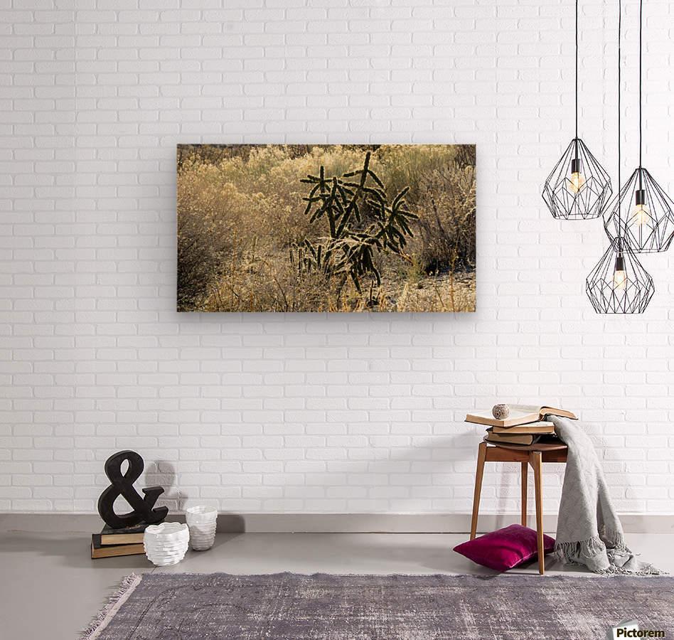 Shimmering  Cactus VP1  Wood print