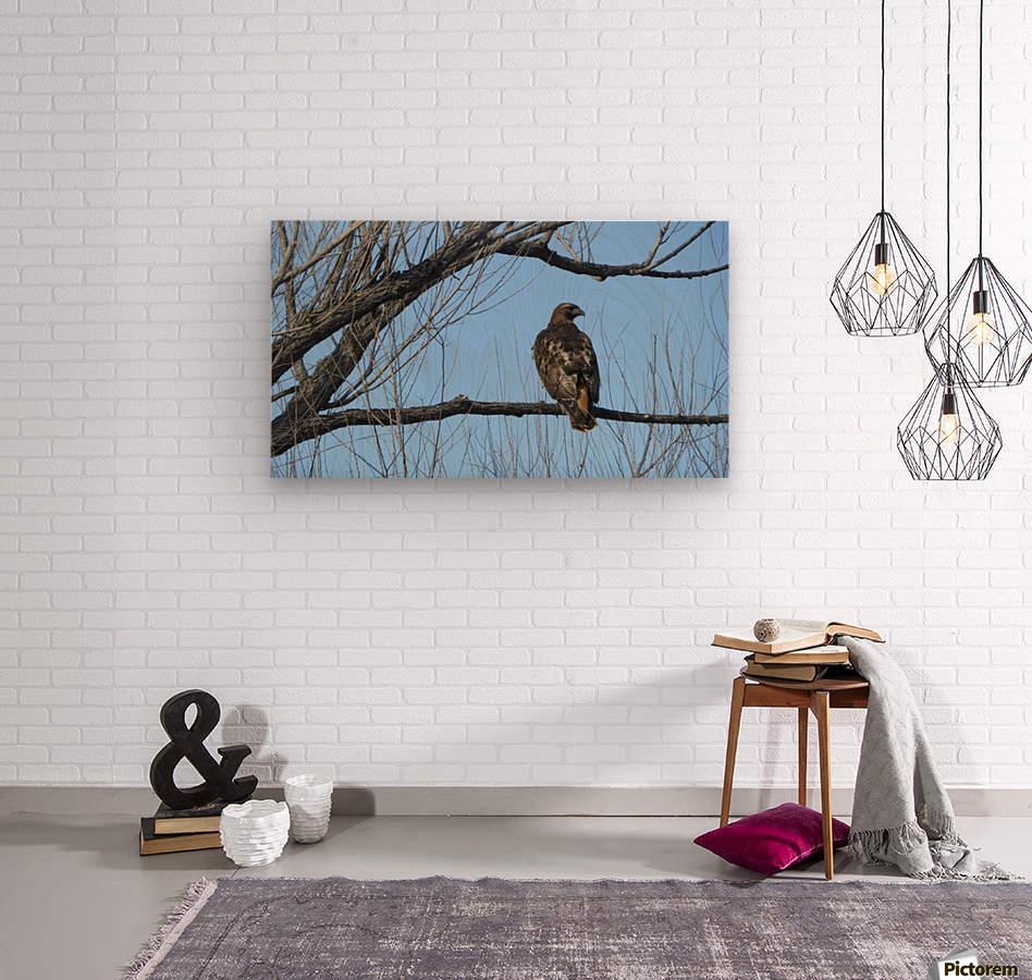 Golden Eagle VP4  Wood print