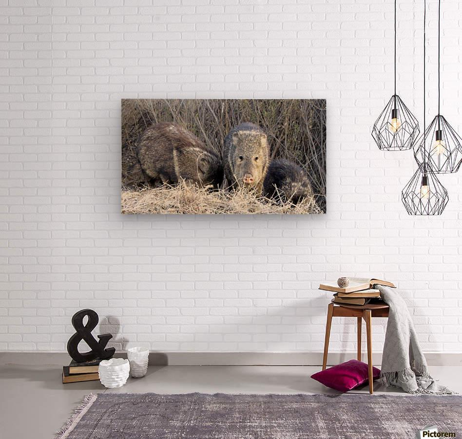 Herd of Javelinas VP2  Wood print