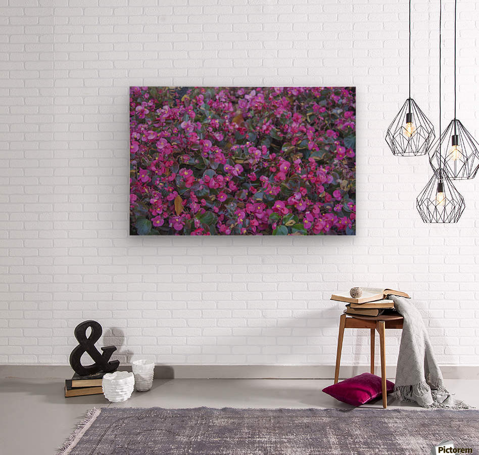 Bubble Gum Begonia  Wood print