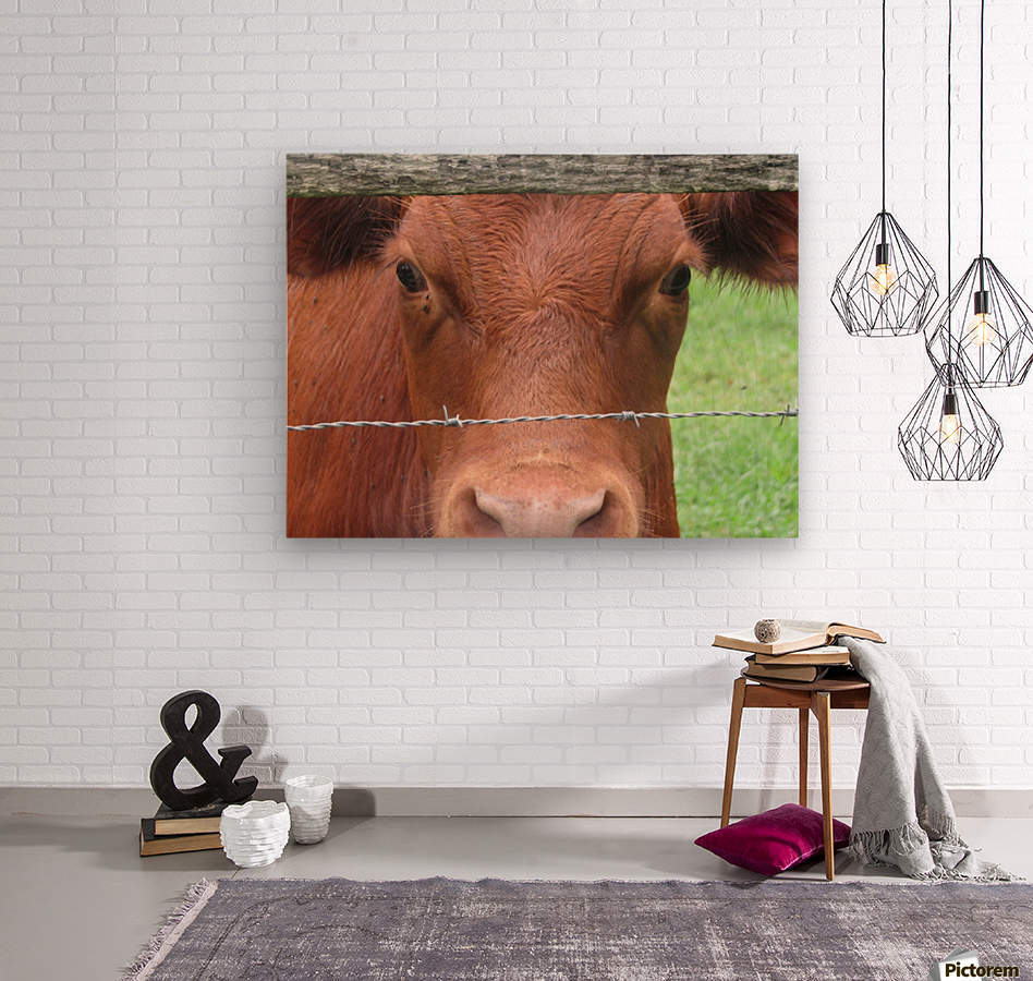 Cow in Stevenson, MD VP 2  Wood print