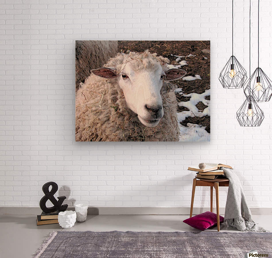 Lamb in the Winter VP1  Wood print