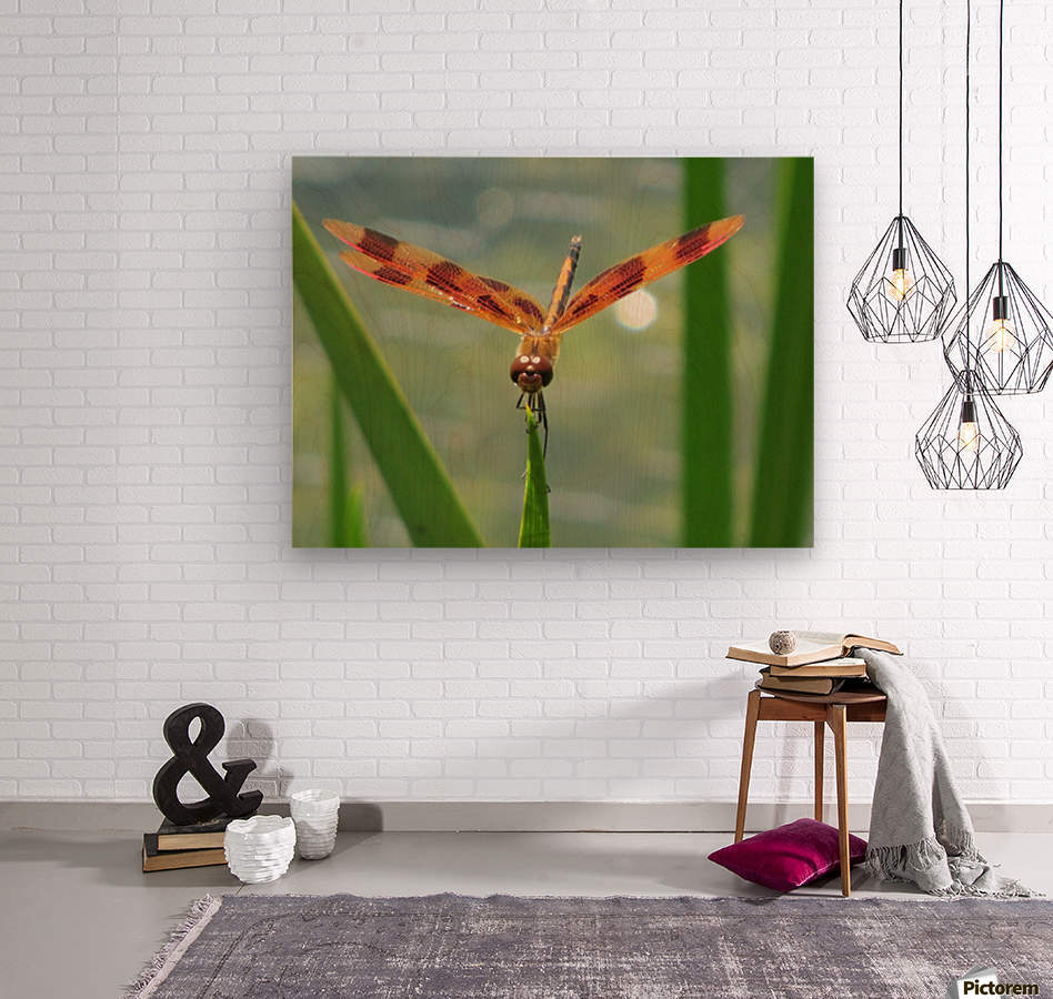 Dragonfly in Lincoln Park VP1  Wood print