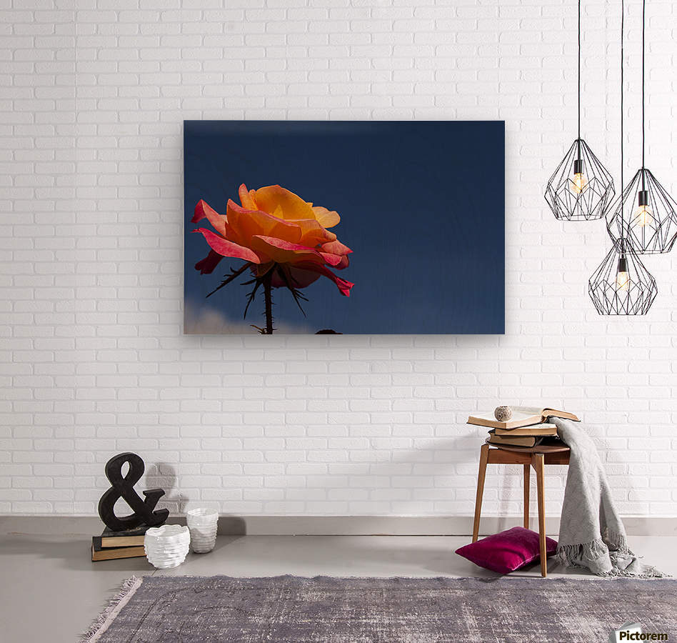 Pink and Orange Rose with Blue Sky  Wood print