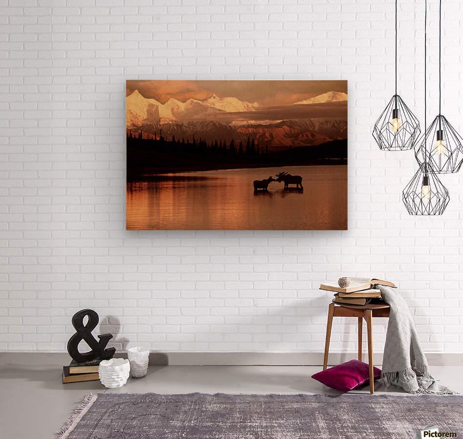 Moose Kissing  Wood print