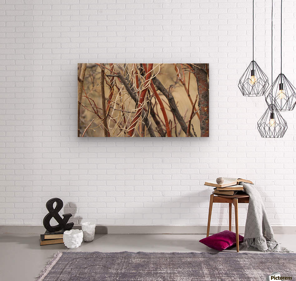 Twigs in the Sandia Mountains VP1  Wood print