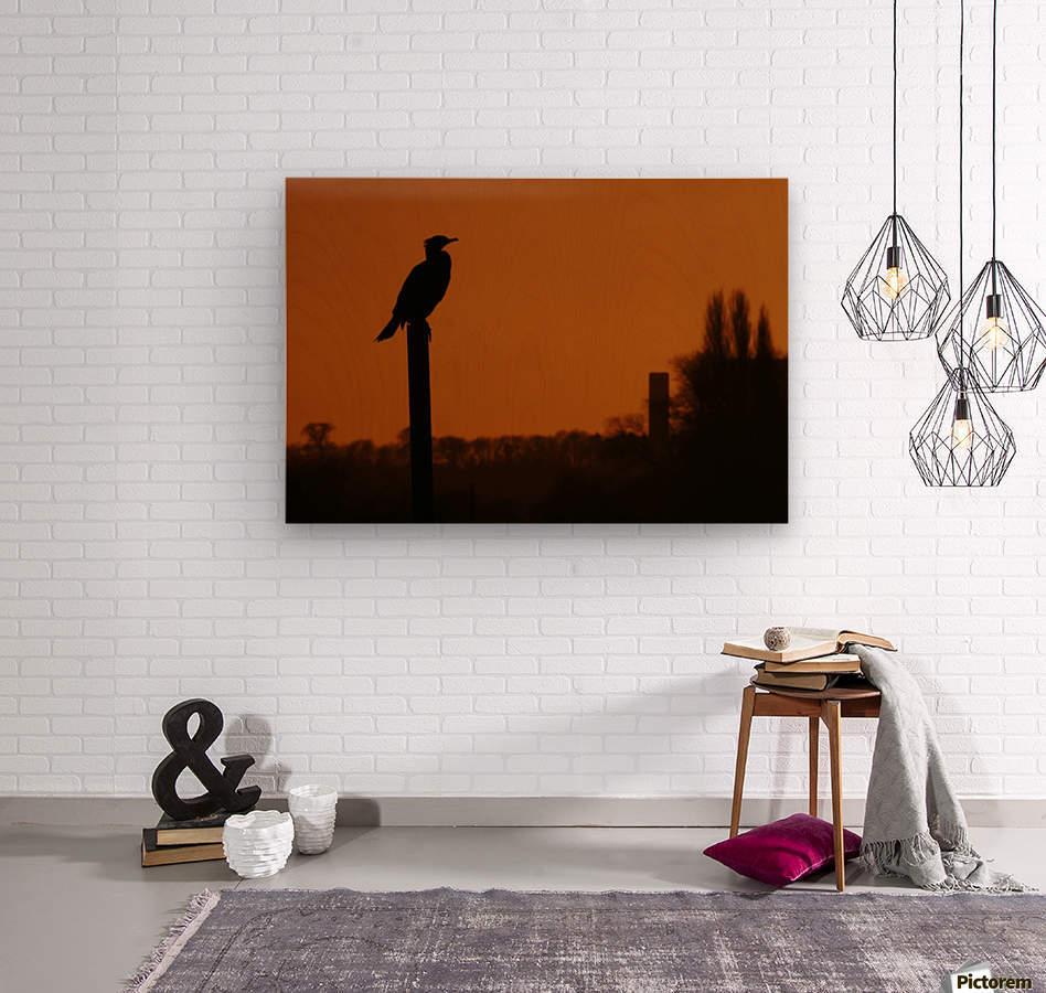 Cormorant perch  Wood print