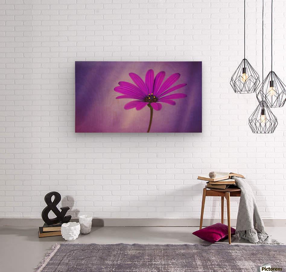 Purple Osteospermum  Wood print
