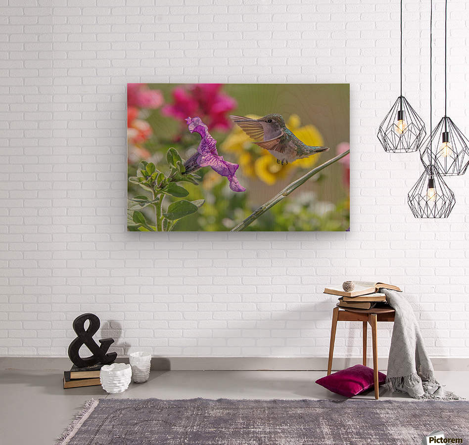 Humming Bird Purple Flower Photo by Jason Andrew Smith  Wood print