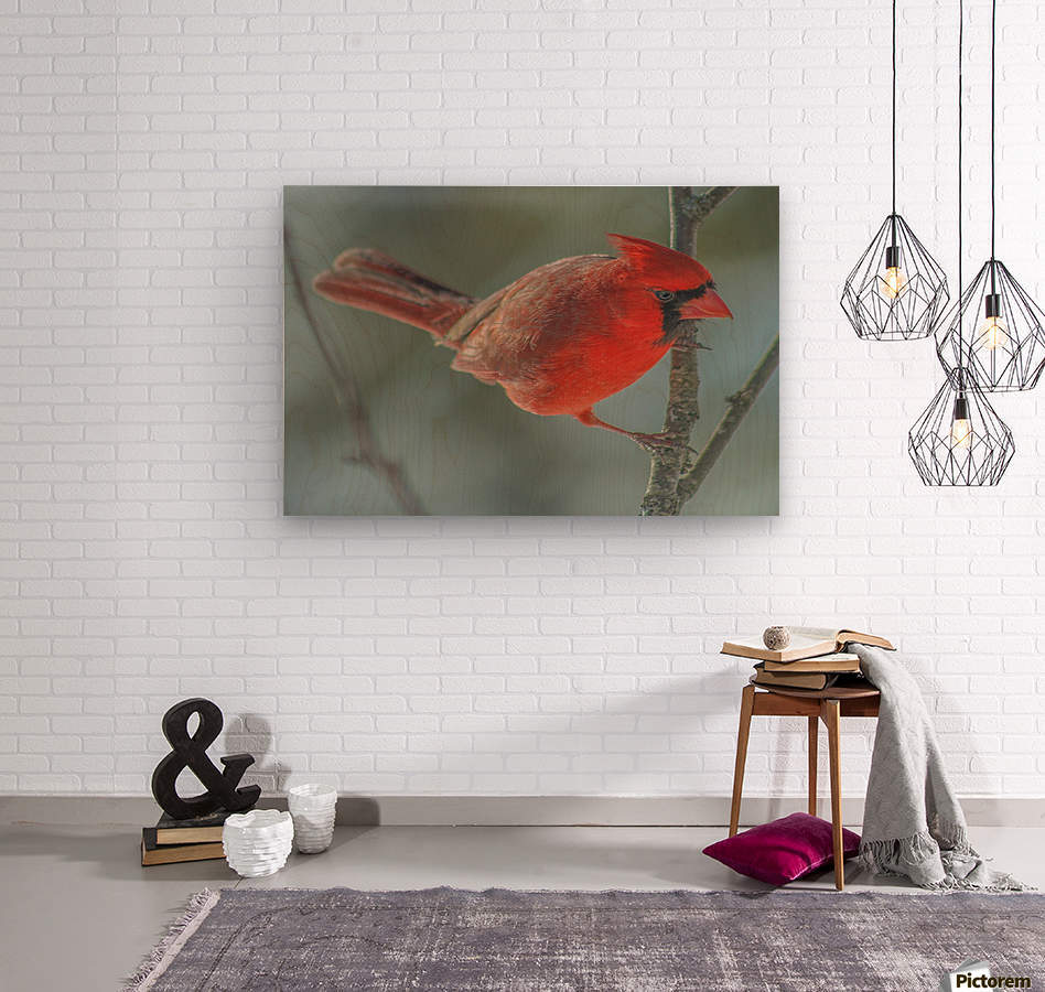Cardinal Photo by Jason Andrew Smith  Wood print
