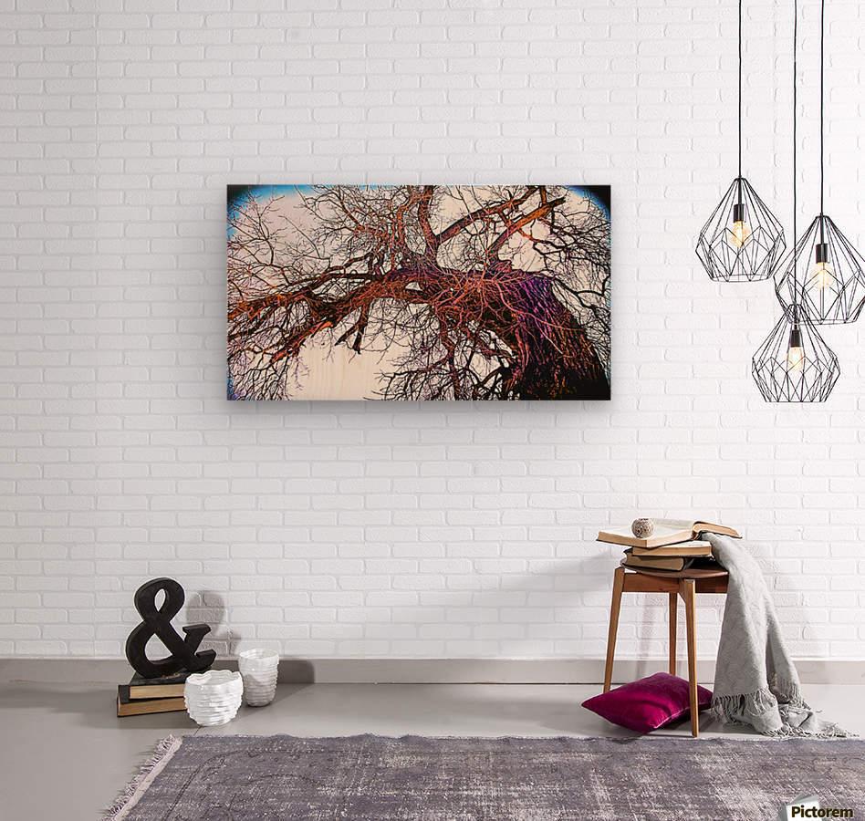 100yearOLDtree  Wood print