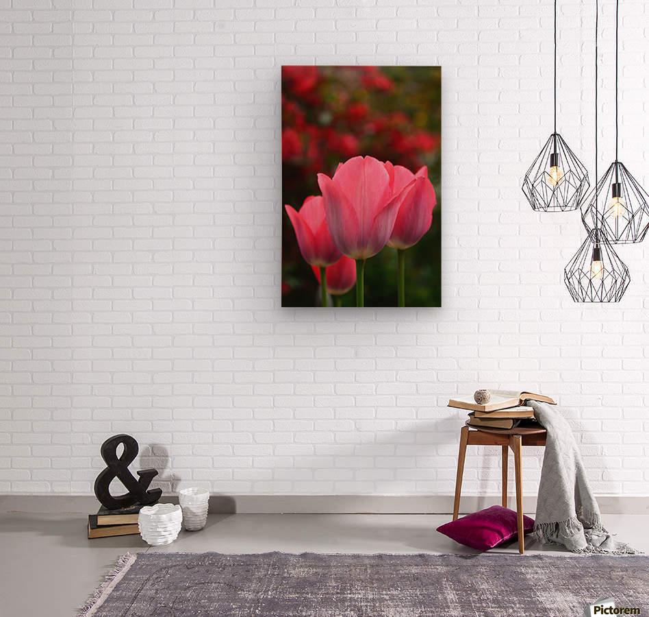 Pink queens  Wood print