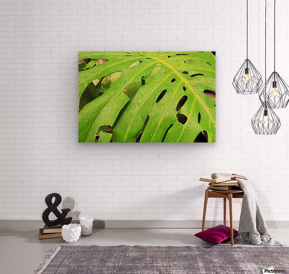 Nevis GR7  Wood print
