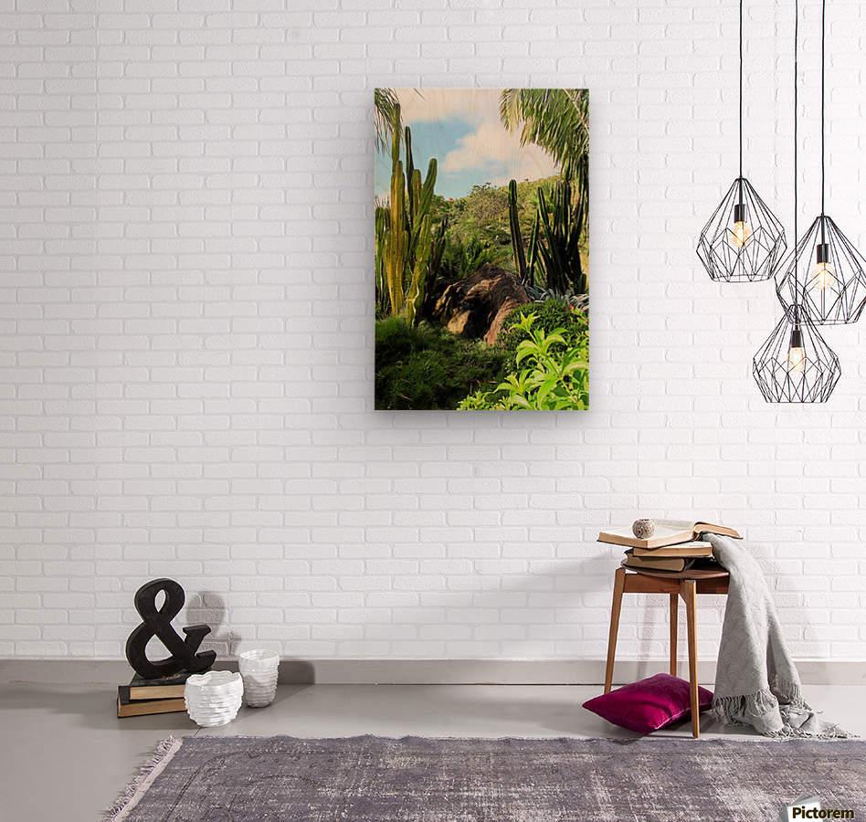 Nevis cactus  Wood print