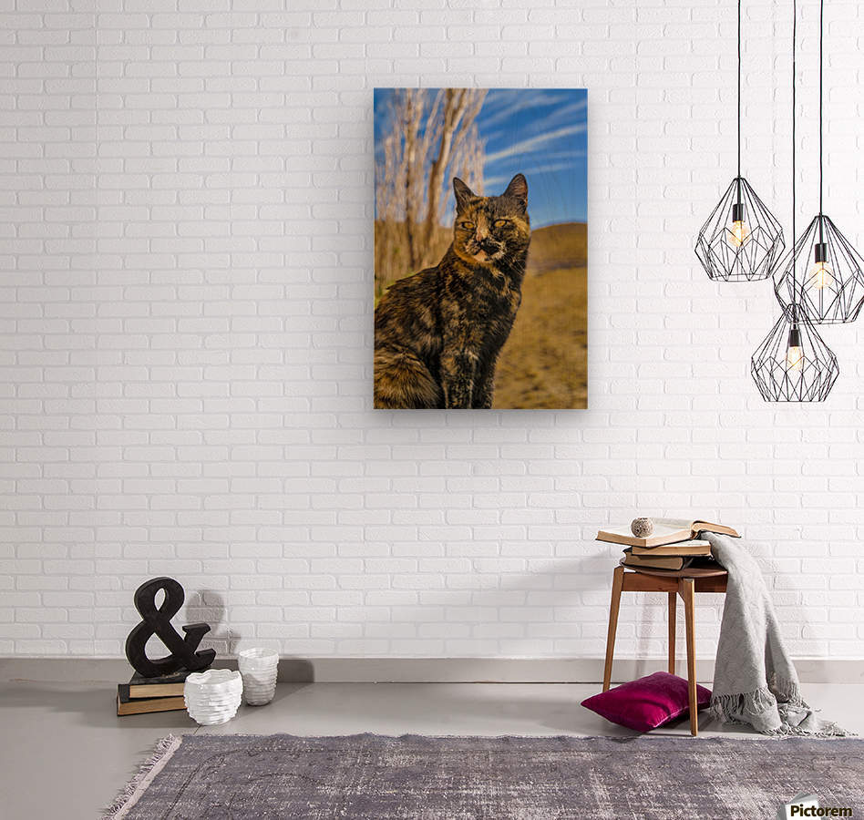 Adult Wild Cat Sitting and Watching  Wood print