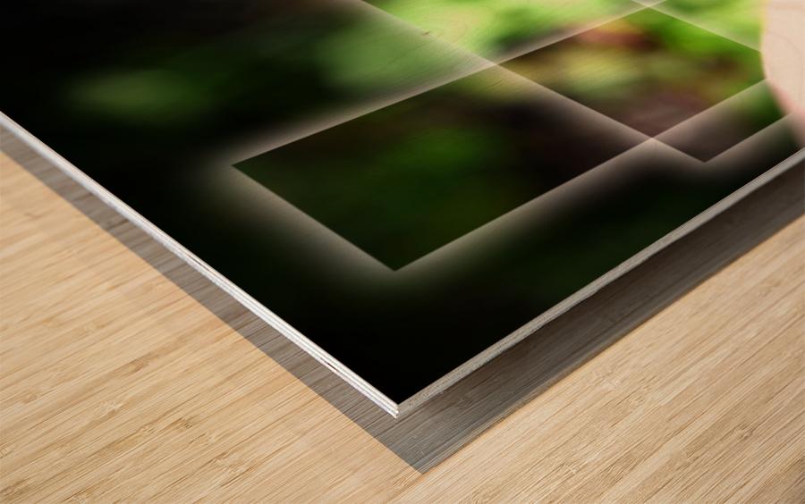 Fragile et résistante Wood print