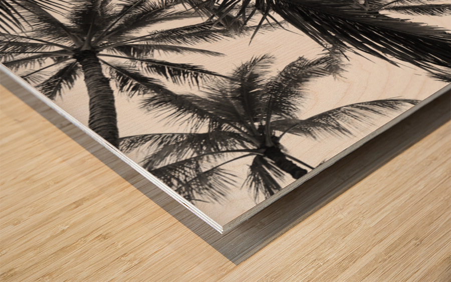 Low angle view of coconut palm trees in black and white; Honolulu, Oahu, Hawaii, United States of America Wood print