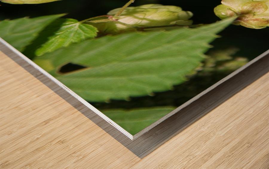 Hop cones Wood print
