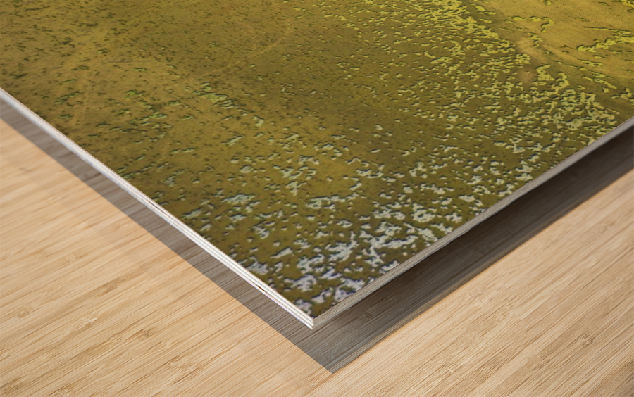 Fish Pond Algae Impression sur bois