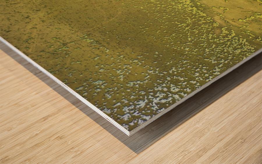 Fish Pond Algae Wood print