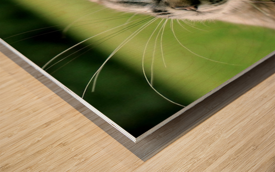 ucing Wood print