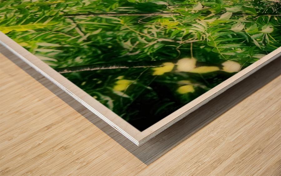 Ghana Wood print