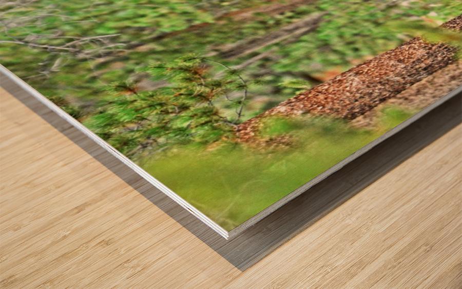 2832- Siesta Wood print