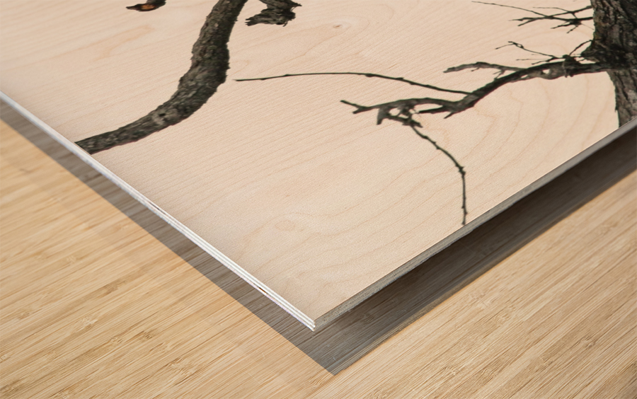 Fierce Bald Eagle Wood print