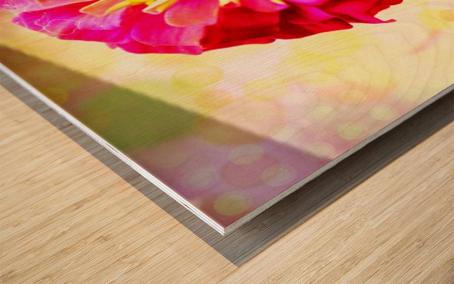 Rainbow daisy Wood print