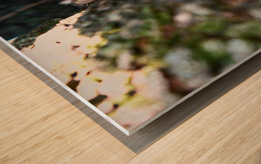tree path 2 2 Wood print