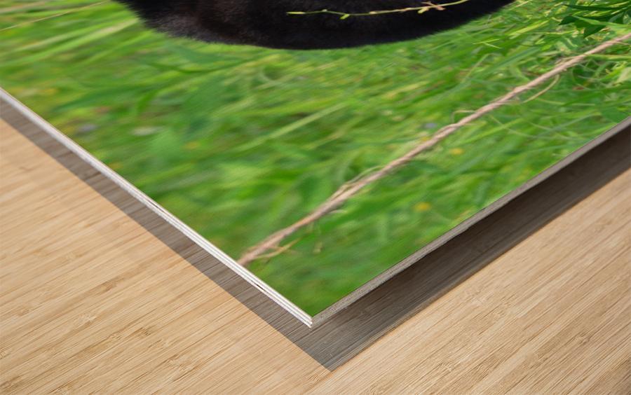 2827-Turn around Wood print