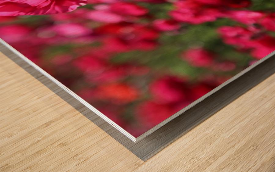 Never-ending Roses  Wood print