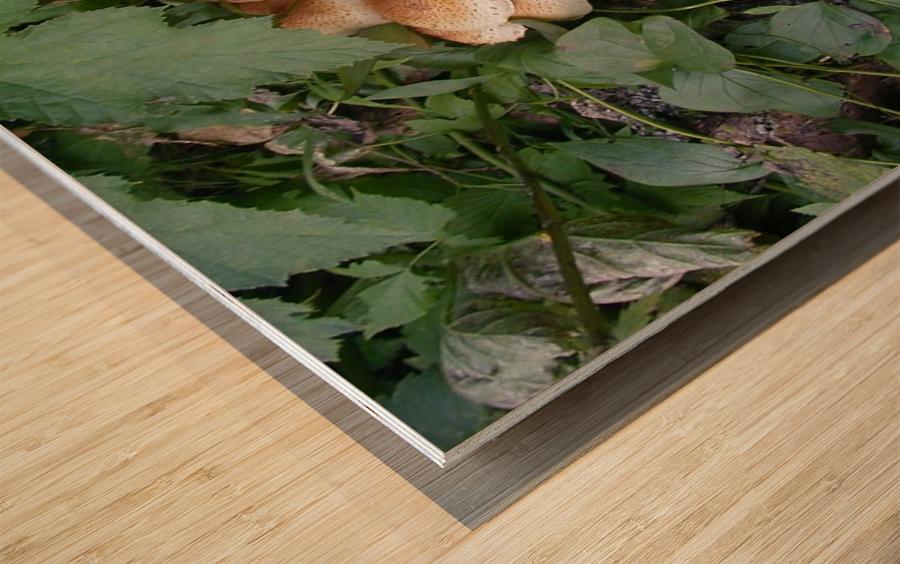 Bun Mushrooms Wood print